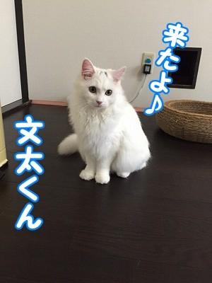 ぶん (7)