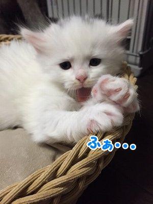 せい (15)