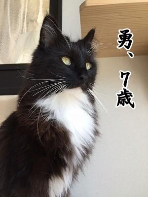 勇 (32)
