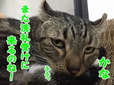 かな (75)
