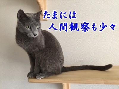 京 (31)