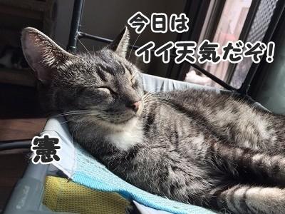 憲 (75)