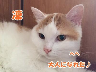 凜 (2)