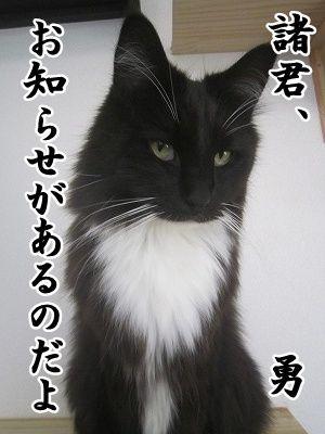 勇 (6)
