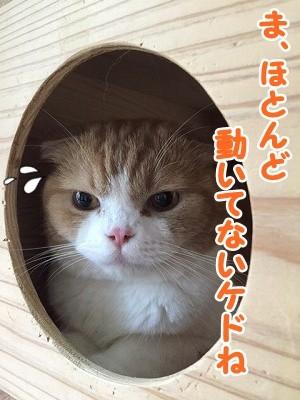 雫・陽 (31)