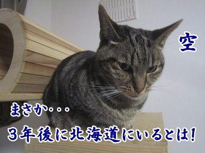 空 (9)