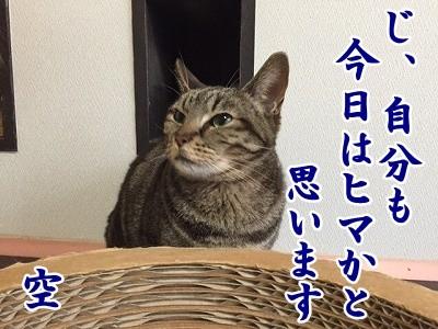 空 (20)