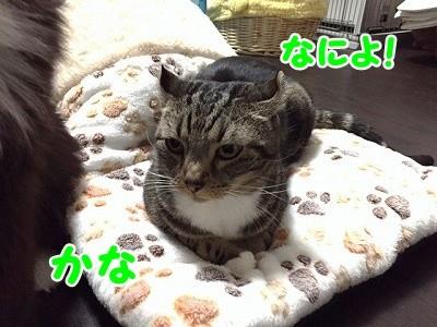 かな (30)