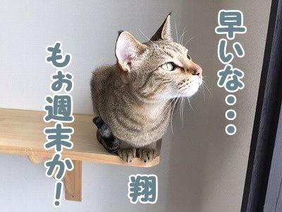 翔 (41)