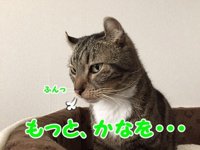 かな (36)