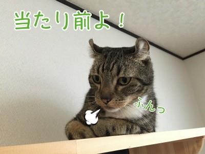 かな121