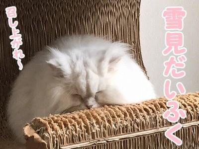 らん (7)