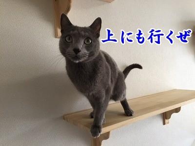 京 (29)