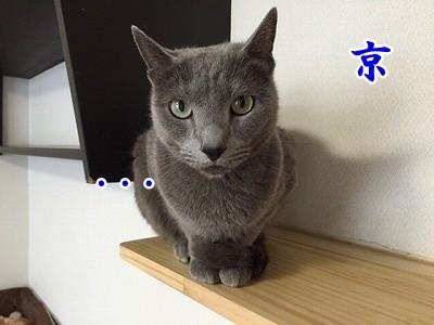 京 (17)