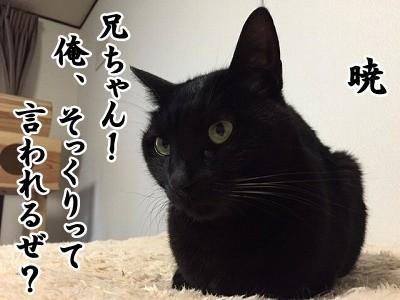 暁 (15)