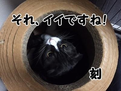 刻 (15)