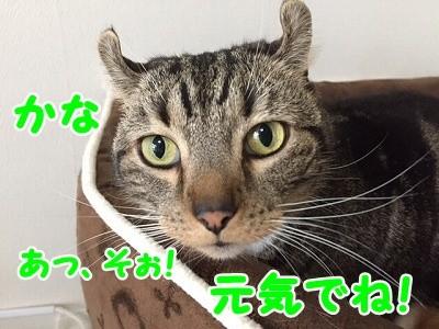 かな (32)