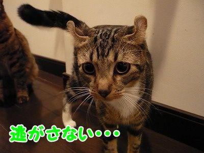 かな (10)