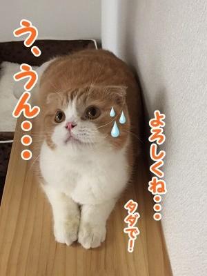 雫・陽 (41)