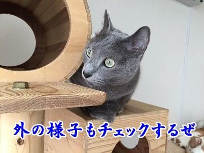 京 (25)