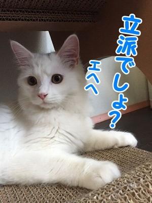 ぶん (2)