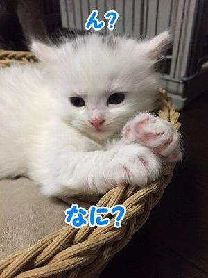 せい (17)