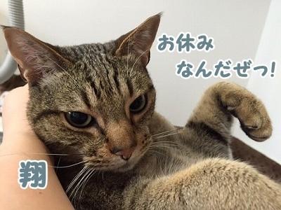 翔 (78)