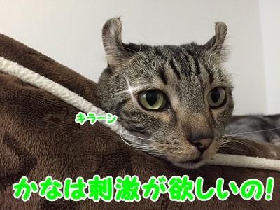 かな (58)