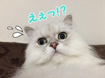 風 (52)