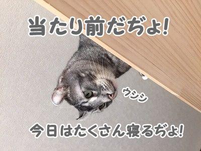 銀 (37)