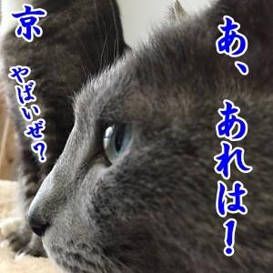 京 (42)