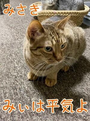 みさき259