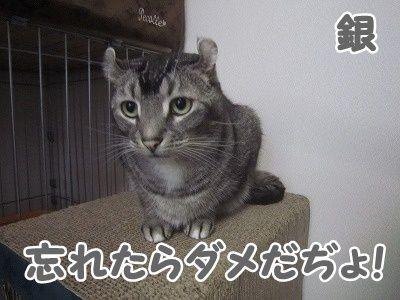 銀 (20)