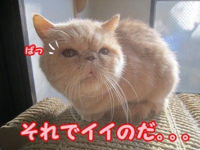 あん (5)