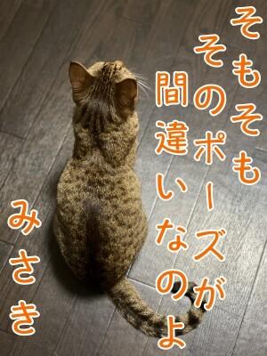 みさき229