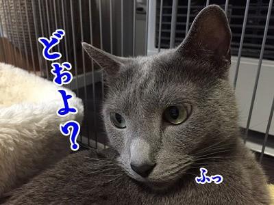 京 (24)