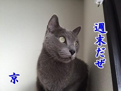 京 (19)