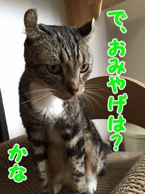 かな (74)