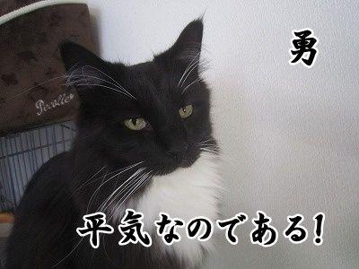 勇 (8)