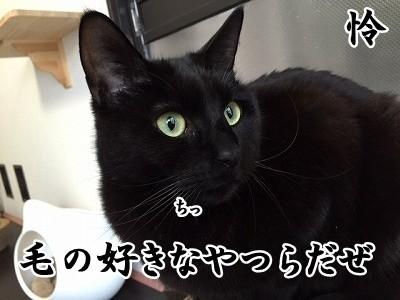 怜 (4)