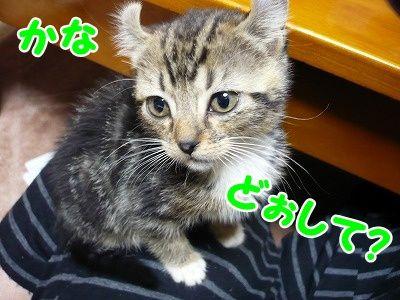 かな (8)