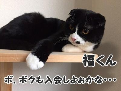 ふく (8)