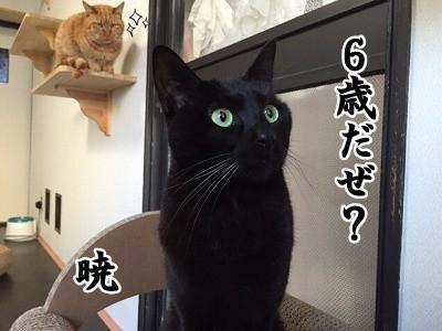 暁 (9)