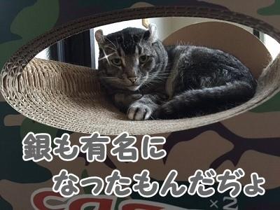 銀 (89)