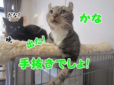 かな (3)