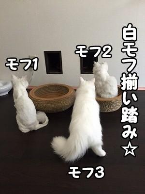 ぶん (5)