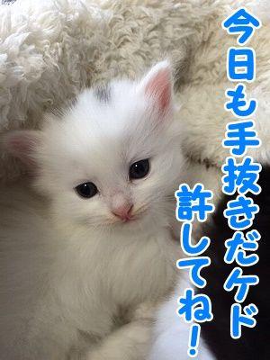 せい (9)