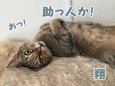 翔 (84)