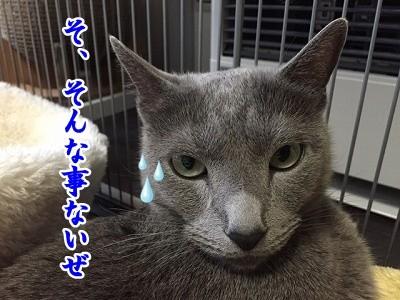 京 (23)