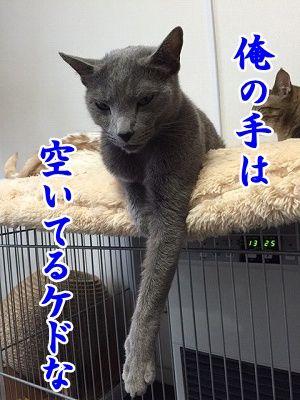京 (12)